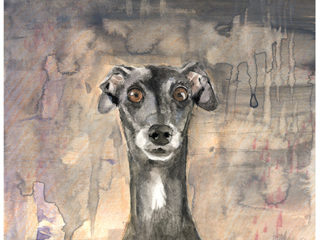 Italian Greyhound Fine Art Print
