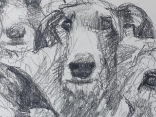 Deerhounds sketch