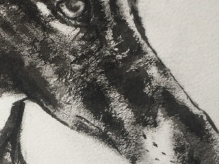 Galgo in Ink